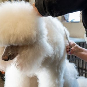 dog clipping, dog grooming, dog bathing, dina doyle, dogs en vogue, coeur d'alene, cda